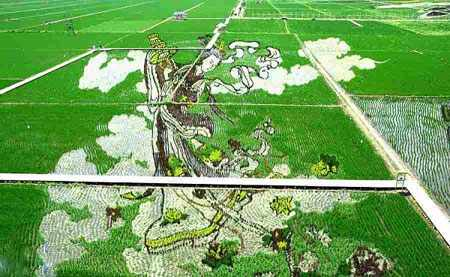 image عکسی زیبا از طراحی جالب مزارع برنج در چین