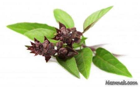 image معرفی سبزی طبیعی برای درمان خارش و اثرات نیش حشرات در طب سنتی