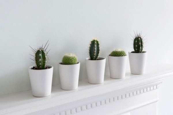 image, گیاهانی که می توان در آپارتمان های کم نور و بسته نگهداشت