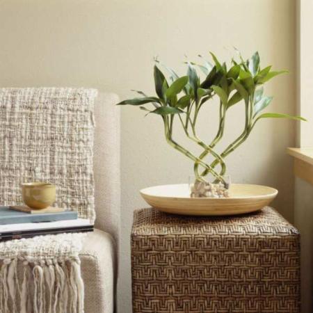 image گیاهانی که می توان در آپارتمان های کم نور و بسته نگهداشت