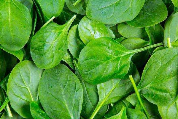 image این خوراکی ها برای استرس نداشتن مفید هستند