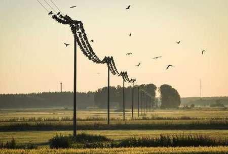 image تصویری از نشستن پرندگان روی کابل های انتقال برق فنلاند