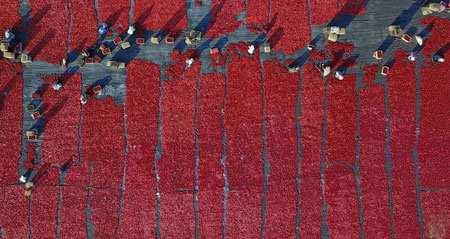 image تصویر هوایی خشک کردن گوجه فرنگی زیر آفتاب چین