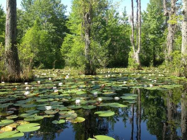 image عکس های دیدنی و توضیحات زیباترین جنگلها در کره زمین