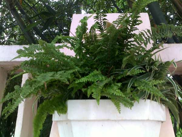 image گیاهانی که نگهداری آنها در خانه شما را سالم و سلامت میکند