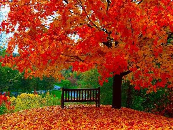 انشا جنگل پاییزی