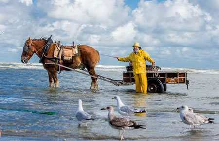 image, عکس زیبا ماهیگیر اسب سوار در حاشیه دریا