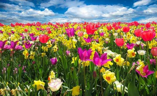 image عکس های زیبا از گل رز برای عکس پروفایل تلگرام