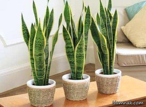 image, معرفی گیاهان آپارتمانی مفید برای تصفیه هوای خانه