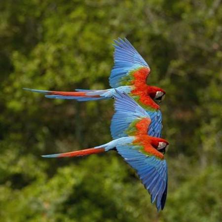 image, تصویری زیبا و دیدنی از پرواز طوطی ها