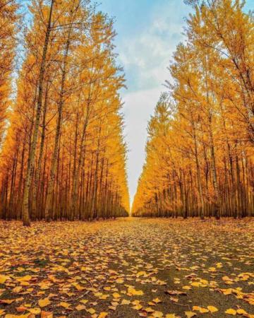 image تصویری فوق العاده زیبا از برگریزان پاییز
