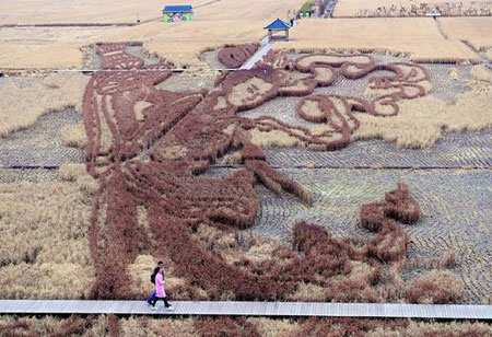 image, نقاشی های سه بعدی روی شالیزارهای برنج در شنیانگ چین