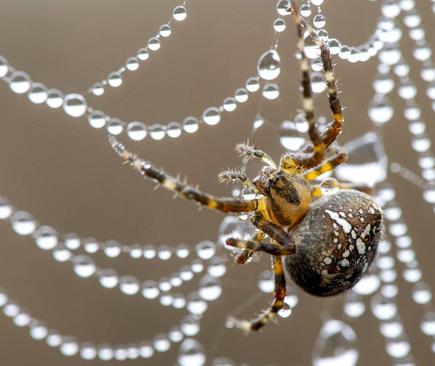 image تصویری زیبا از تور نمناک یک عنکبوت آمریکا