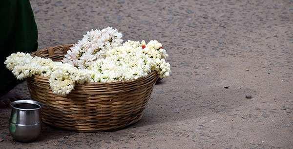 image تصاویر گل های زیبا برای عکس پروفایل تلگرام