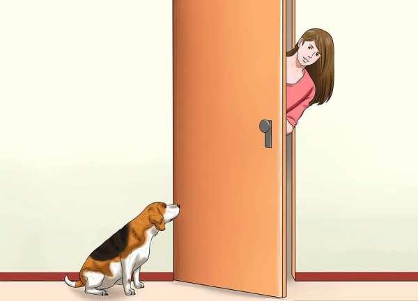 image چطور جلوی پارس کردن های مزاحم سگ را بگیرید