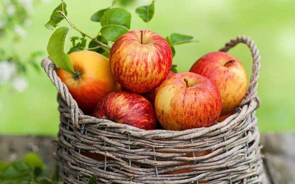 image تاثیر مصرف سیب و آب سیب بر روی سلامتی و زیبایی