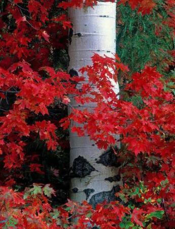عکس, تصاویر فوق العاده زیبا و دیدنی از فصل پاییز
