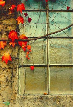 image, تصاویر فوق العاده زیبا و دیدنی از فصل پاییز