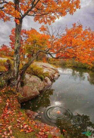 image تصاویر فوق العاده زیبا و دیدنی از فصل پاییز