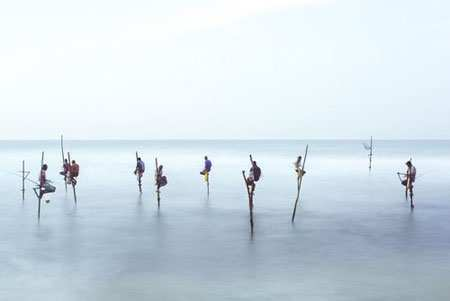image شیوه جالب ماهیگیری در سواحل سریلانکا