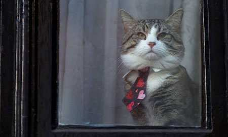 image, عکس گربه جولیان آسانژ موسس ویکی لیکس  پشت پنجره سفارت در لندن