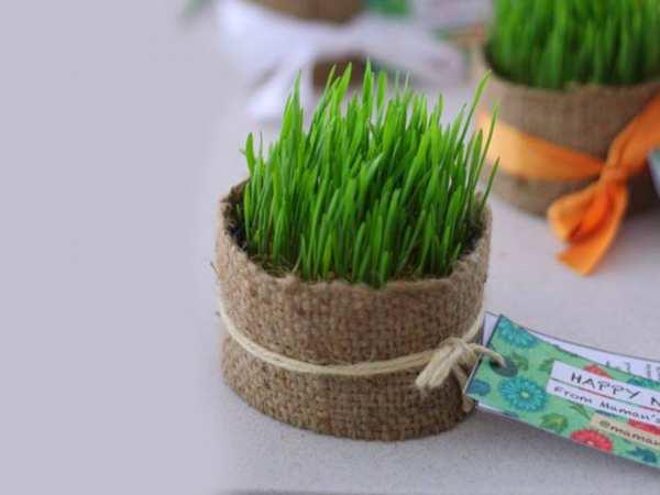 image, ایده های جدید برای مدل های مختلف کاشت سبزه هفت سین