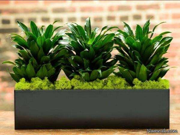 image چه گیاهی در آپارتمان هوا را تمیز و تصفیه میکند