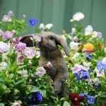 image تصاویر زیبای حیوانات هنگام بوییدن گل