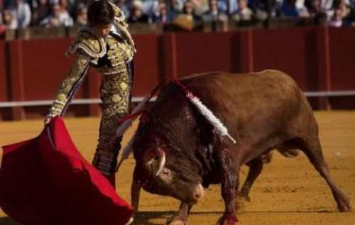 image تصویری زیبا از گاوبازی در سویل اسپانیا