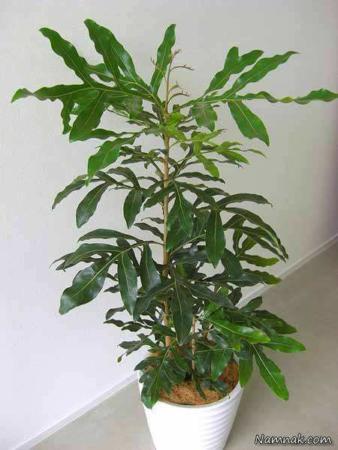 image چه گل و گیاهی برای نگهداری در آپارتمان با نور کم مناسب است