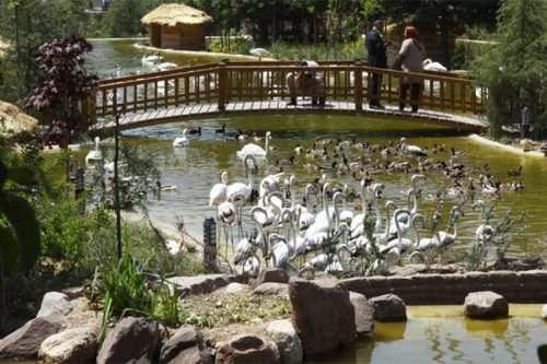 image گزارش تصویری دیدنی از باغ پرندگان تهران