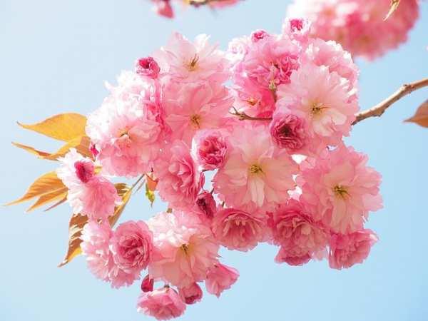 image تصاویر فوق العاده زیبا از شکوفه های بهاری