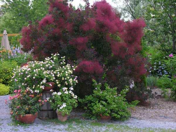 image چه نوع درختی برای کاشت در فضاهای باز مقاوم و مناسب است