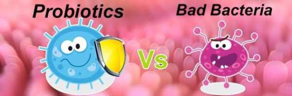 عکس, چرا پروبیوتیک برای بدن لازم است و در چه موادی یافت می شود