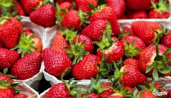 image توت فرنگی مفید یا مضر برای سلامتی انسان