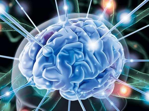image, امگا ۳ بهترین ماده غذایی برای داشتن مغزی قوی