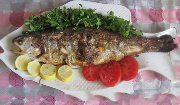 عکس, مصرف هفتگی ماهی قزل آلا برای سلامتی چه فایده ای دارد