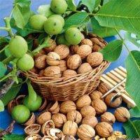 image گردو مفید یا مضر برای سلامتی قلب