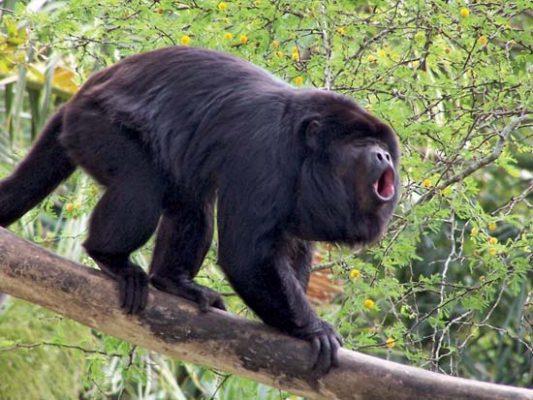 image مقاله جالب و خواندنی درباره میمون ها با تصاویر دیدنی