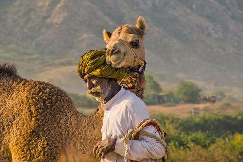 عکس, تصویری خاص از نمایشگاه شتر در پوشکار هند