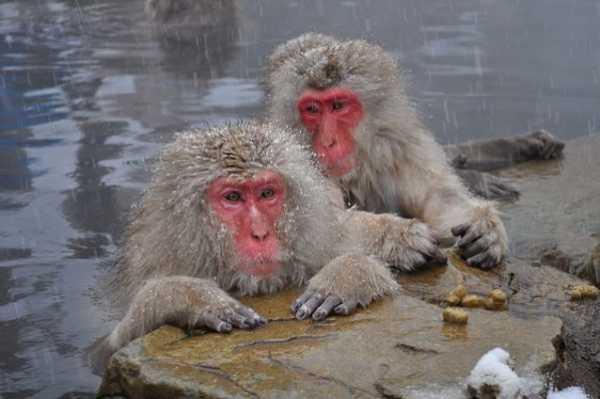 عکس, مقاله جالب و خواندنی درباره میمون ها با تصاویر دیدنی