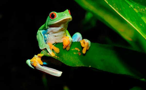 image عکس های رنگی و شاد از قورباغه ها