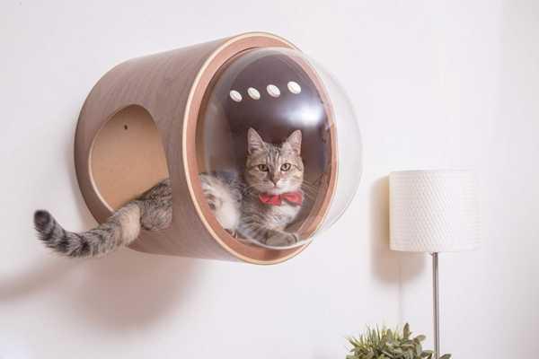 image ایده جالب برای ساخت خانه گربه دیواری