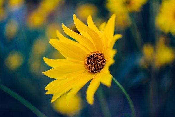 image مجموعه عکس های فوق العاده زیبا از طبیعت