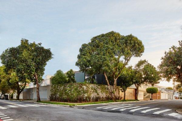 عکس, چطور از گیاهان سبز و درختان برای دکوارسیون خانه استفاده کنید