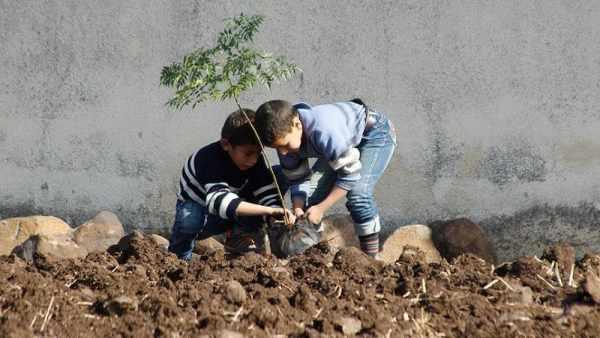 عکس, آموزش بهترین روش های کاشت درخت و نهال