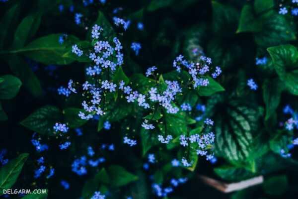 image تصاویر زیبا از گل های زیبا