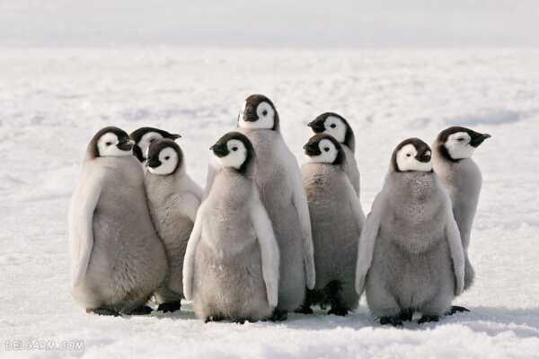 image عکس های بامزه از پنگوئن