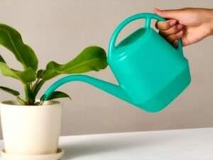 عکس, نکته های مهم برای نگهداری از گل و گیاه