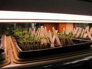 image آموزش کامل کاشت هر نوع بذر گل و گیاه